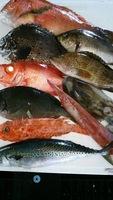 今が旬のお魚をお造りとか焼いたり煮たり揚げたり