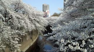 神田川面影橋にいったよ